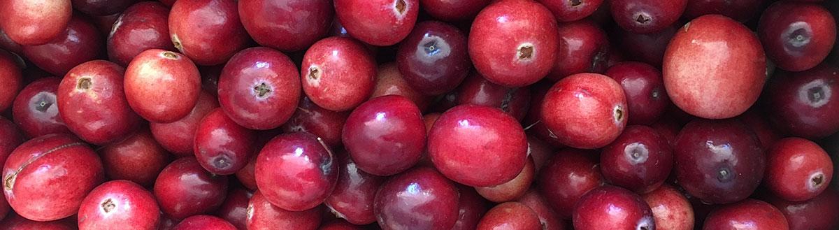 Scarlet Cranberries.